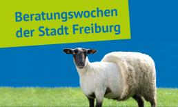 Beratungswochen der Stadt Freiburg, Infoabend